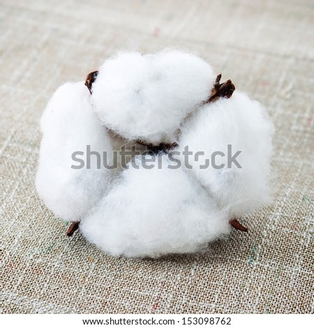 Cotton texture and cotton boll - stock photo