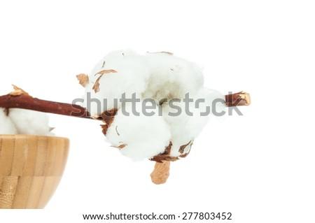 Cotton twig on white background - stock photo