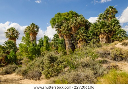 Cottonwood spring with palm trees in Joshua Tree National Park, California - stock photo