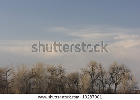 Cottonwood trees against blue sky with some clouds in very early spring (no leaves but thick buds), Colorado prairies. Copy space. - stock photo