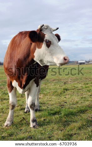 country bronze cow on meadow