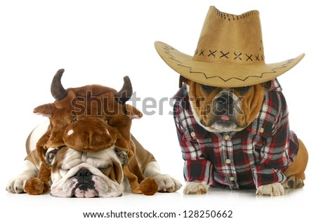country dog - english bulldog dressed up like a farmer and a bull isolated on white background - stock photo