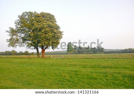 Country Field - stock photo