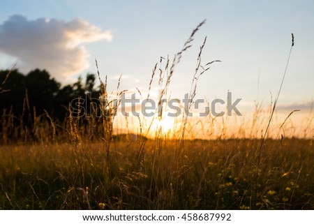 Country field in the the setting sun rays, sunset backlight