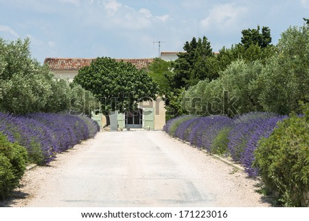 Country house near Montpellier (Herault, Languedoc-Roussillon, France) at summer, with trees and lavender