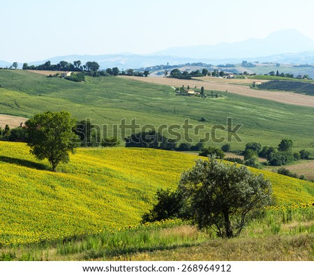 Country landscape between Jesi and Ostra (Ancona, Marches, Italy) at summer