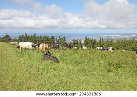Country landscape in Sao Miguel island Azores Portugal - stock photo