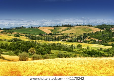 Country landscape of Monferrato (Asti, Piedmont, Italy) at summer, with the Alps in background