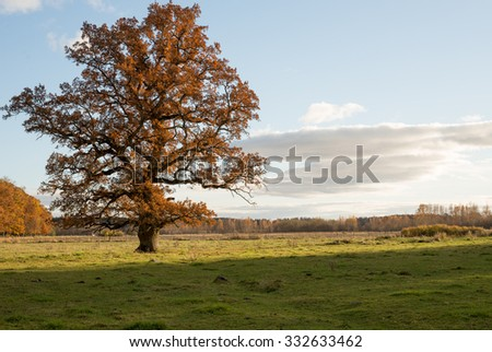 Country landscape with a lonely oak in autumn at sunset - stock photo