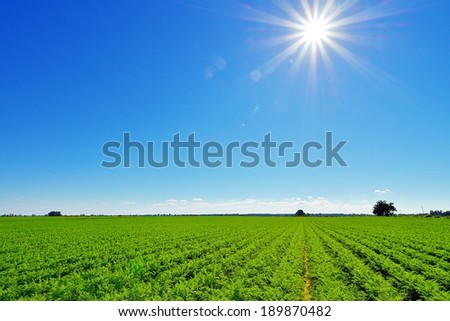 Country landscape with beautiful sky. - stock photo