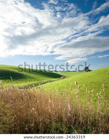 country landscape with stalks of reed bloom - stock photo