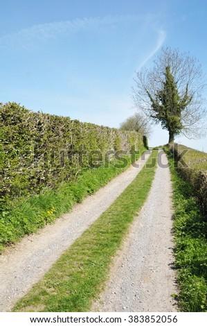 Country Lane through Farmland - stock photo