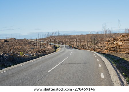 Country road a year after a big forest fire in Sweden  - stock photo