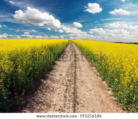 Country road across rape field  with beautiful cloud - plant for green energy  - stock photo