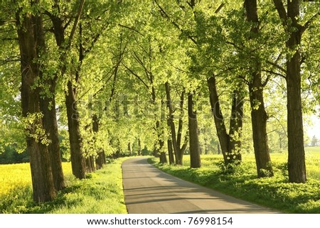 Country road among the fresh green of spring foliage of the trees backlit by the evening sun. - stock photo