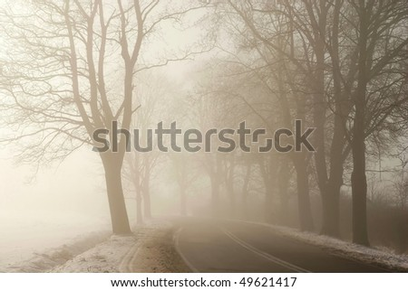 Country road among the trees surrounded by the morning mist. Photo taken in January. - stock photo