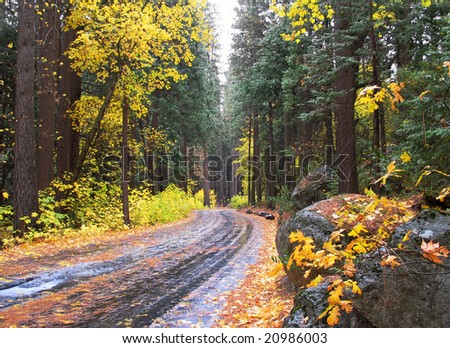 Country road and fall color with leaves on the ground