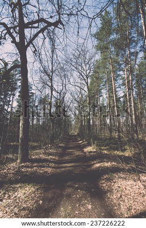 country road in forest - retro, vintage style look