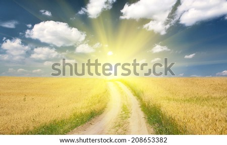 country road in gold wheat field under blue sky - stock photo