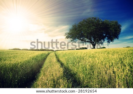 Country road in golden yellow field to the distant horizon under a blue cloudy sky and shiny sun-rays - stock photo