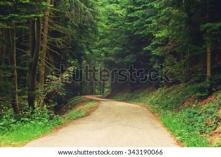 Country road in mountain forest. Scenic natural background. - stock photo