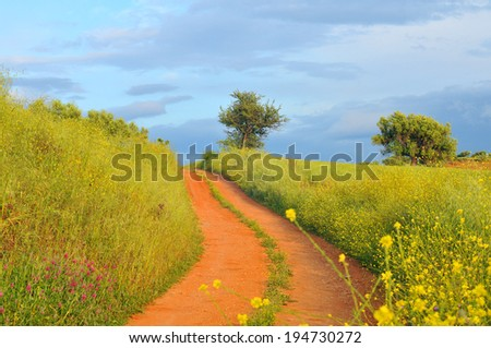 Country road in the fields - stock photo