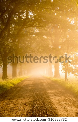 Country road lead by deciduous forest in sunrise - stock photo