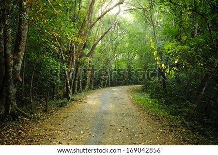 Country road running through the deciduous forest. - stock photo