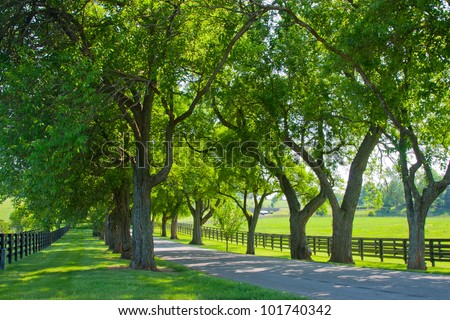 Country road running through tree alley - stock photo