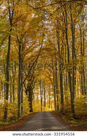Country road surrounded by beech wood in autumn at sunset - stock photo