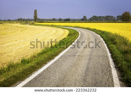 Country road through paddy fields. Color image - stock photo