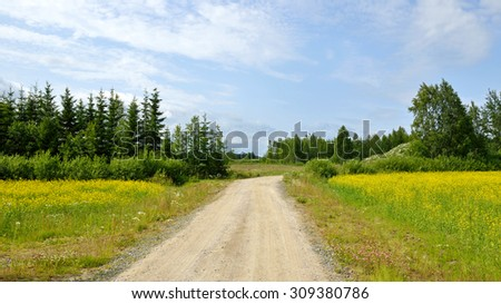 Country road through rape field