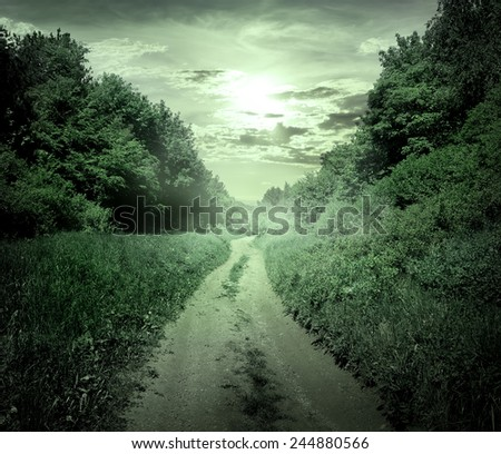 Country road through the forest at twilight - stock photo