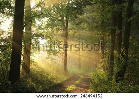 Country road through the forest on a June morning. - stock photo