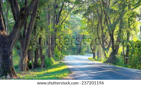 Country road tunnel of green trees on sunlight with shadow on street in Nan city of Thailand.  - stock photo