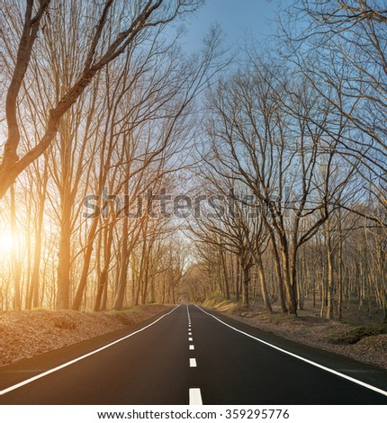 Country road with naked trees during sunset