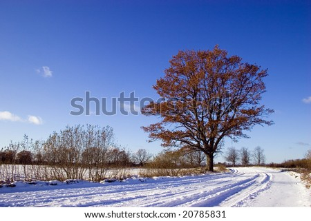 Country road with snow and oak tree with leafs - stock photo
