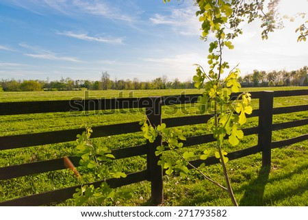 Country scenery at sunny spring day. Lens flare. - stock photo