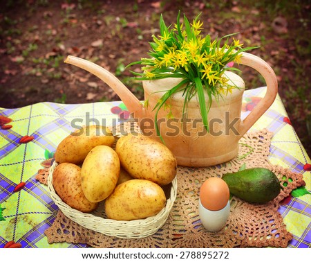 country stiled outdoor still life with watering can potato avocado egg on the green garden background - stock photo