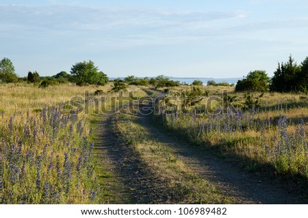 Countryside dirt road with blue flowers - stock photo