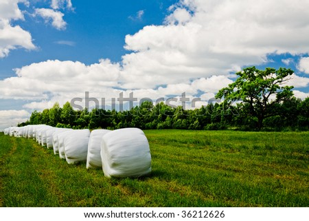 Countryside field with old oak and hay bales wrapped in plastic on sunny day - stock photo