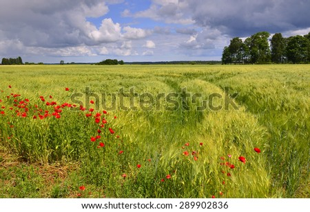 Countryside landscape by summer, Latvia, Europe
