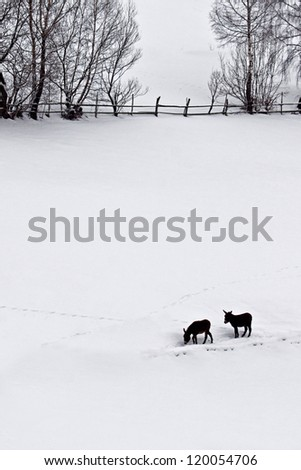 countryside landscape on winter season with two donkeys, wooden fence, trees and traces on snow. hansel and gretel. - stock photo
