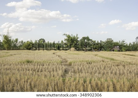 Countryside landscape - rice field after harvest under a blue cloudy sky - stock photo