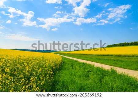 Countryside road along yellow rapeseed flower field and blue sky with white clouds, Burgenland, southern Austria