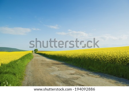 Countryside road and yellow colza field under blue cloudy sky - stock photo