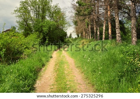 Countryside road through lush summertime landscape - stock photo