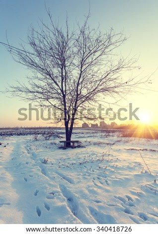 Countryside road through winter forestwith forest on a horizon. Vintage colur