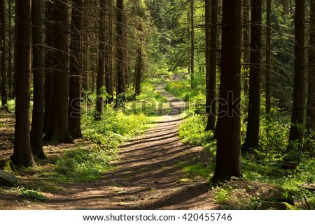 countryside rural forest path in the spruce forest, czech countryside, middle european rural landscape