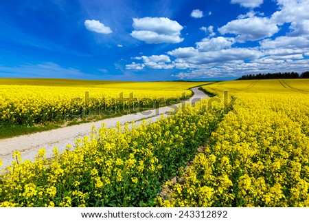 Countryside spring field landscape with yellow flowers - rape. Blue sky, rural way. - stock photo